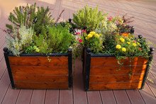 Flowers In A Wooden Planter Ou...