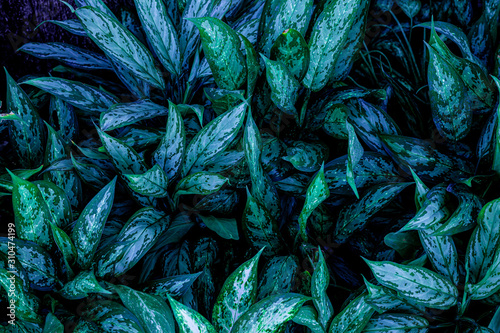 abstract green leaf texture, nature background, tropical leaf - 310474199