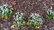 canvas print picture - Reif auf Pflanzen nach einer frostigen Nacht im Dezember
