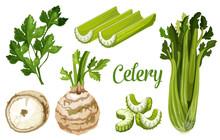 Organic Farm Bio Celery Leaf, Stem And Tuber Root