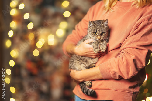 Foto Beautiful mongrel cat on the hands of a girl on the background of bokeh Christmas garlands