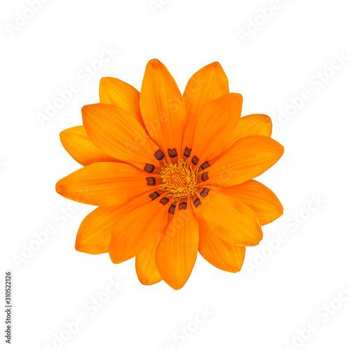 Photo Gazania yellow orange bright beautiful flower isolated on white