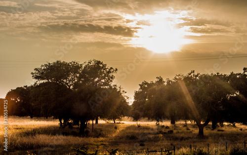 Por do sol no Alentejo Canvas Print