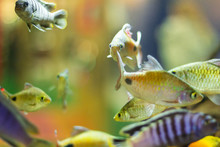 Many Colored Fish In The Aquar...