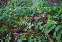 Two Snakes On Tree Branch Clos...
