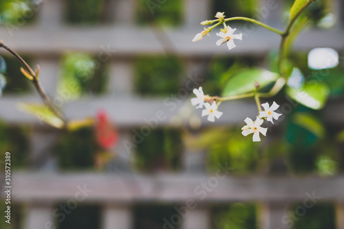 Photo  jasmin plant with tiny white flowers surrounded by greenery and fence bokeh