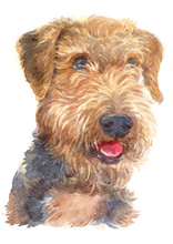 Water Colour Painting Of Airedale Terrier Dog 110