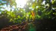 Avocado seedlings growing in the morning sunshine