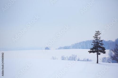 Fotografie, Tablou  北海道の雪景色