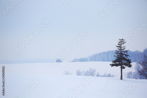 Obraz na plátně  北海道の雪景色