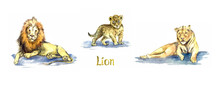 Lion Family Collection, Lion, ...