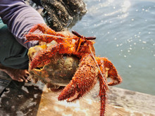 Thai Fisherman Hold Alive Big ...