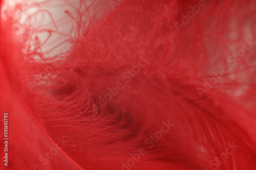 Close up Beautiful red trends bird  feather pattern texture background. Macro photography view. - 310643793