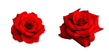 Two Red Rose Isolated On White...