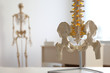 Human spine model on table in orthopedist's office, closeup