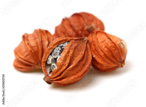 Dried Herbs, Latin name: Amomum villosum Lour Canvas-taulu