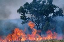 Australia Bush Fire
