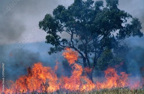 Canvastavla Australia Bush fire