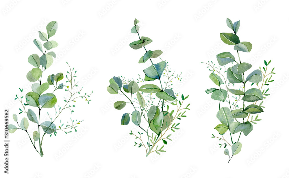 Fototapeta Watercolor hand painted bouquet silver dollar eucalyptus and green plants set.  Greenery plants and nature eco design frolar branches and leaves. Rustic illustration for design, card, banner