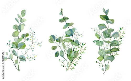 Obraz Watercolor hand painted bouquet silver dollar eucalyptus and green plants set.  Greenery plants and nature eco design frolar branches and leaves. Rustic illustration for design, card, banner - fototapety do salonu