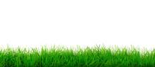 Wide Natural Green Grass Meado...