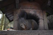 Squirrel Looking Into Camera