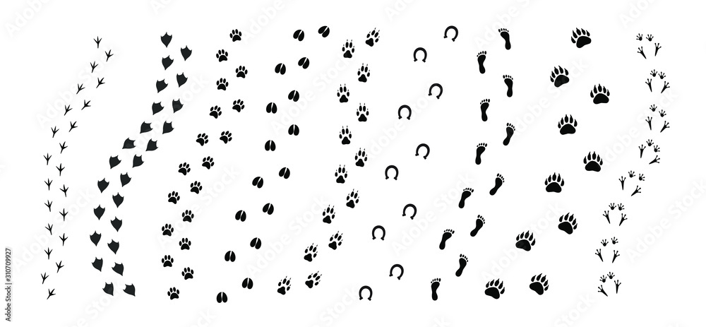 Fototapeta Vector black set bundle of different animals foot print path tracks isolated on white background