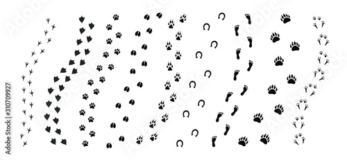 Stampa su Tela Vector black set bundle of different animals foot print path tracks isolated on