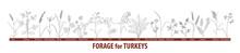 Big Set Forage Plants For Turkeys - Chufa Sedge, Chicory, Alfalfa, Clover, Millet, Oat, Rye, Sorghum, Forage Pea, Sainfoin, Orchard Grass, Ryegrass, Wheat. Black And White Drawing.