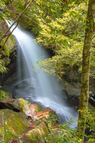 waterfall in forest Wall mural
