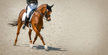 Dressage Horse And Rider In Black Uniform. Beautiful Horse Portrait During Equestrian Sport Competition, Copy Space.