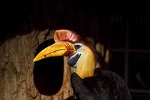 Closeup Shot Of A Hornbill Bir...