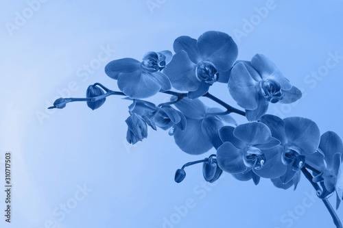 beautiful-blue-orchids-classic
