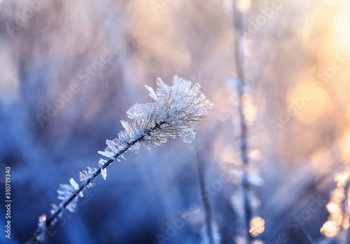 shiny transparent crystals of cold frost cover the grass in morning Sunny Park Fototapeta