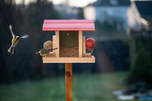 Birds Enjoy Seed Feeder In The...