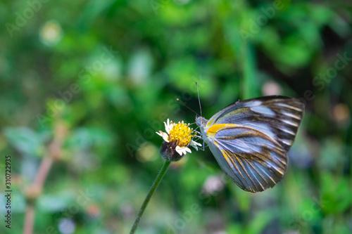 Fotografie, Obraz  butterfly and wild flower