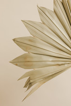 Detail Of Dried Palm Leaf