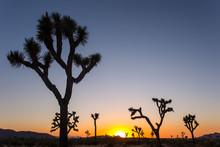Sunset And Sunrise At Joshua Tree Blue