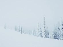 Alpine Snow Covered Trees