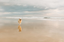 A Dog Runs Along The Beach In ...