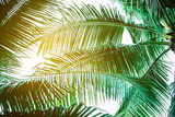 Coconut palm leaves perspective view , tropical palm leaves background
