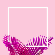 Natural Pink Palm Leaf With White Frame On Pastel Pink Background, Nature Background