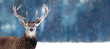 canvas print picture - Beautiful Noble deer male with big horns in winter snow forest. Winter christmas banner. Copy space.