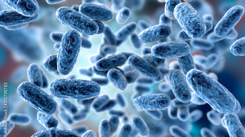 Bacteria Bordetella pertussis, 3D illustration Canvas Print