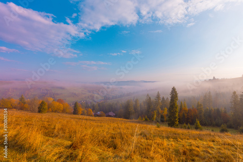 Beautiful autumn scenic panorama of foggy valley at Carpathian mountains at early morning before sunrise. Grass hill with yellow trees on foreground. #310801534