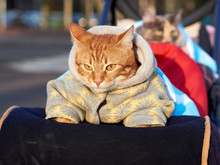 Home Cute Cat In Warm Clothes ...