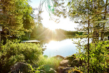 Morning In Forest, In Sweden Scandinavia North Europe