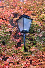 Street Lamp On A Background Of...