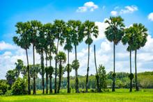 Palm Tree And Blue Sky Background.