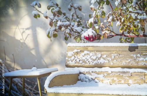 Fotografia Winter in garden